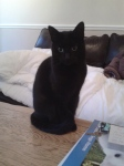 Beautiful black cat. I'm ashamed I've forgotten her name.