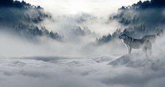 wolf winter image. FREE pixabaydotcom copy